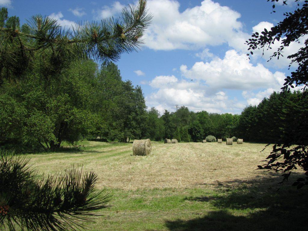 Abbaye - La pature avec meules de foin