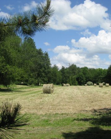 Abbaye- la pature
